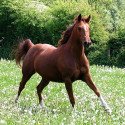 brown_horse-free-photos.jpg