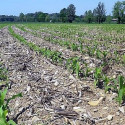agricolturaconservativa