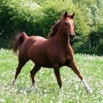 Cavalli, animalismo e buon senso